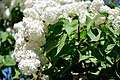 Весна в Ботанічному саду ім. М. Гришка.jpg