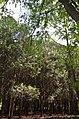 """Дендропарк """"Подолье"""" город Хмельницкий. Фото 26.jpg"""