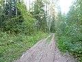 Дорога-The forest road, середина сентября 2012 - panoramio.jpg
