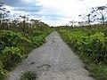 Дорога в зарослях марсианских растений - panoramio.jpg