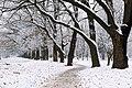 Дубова алея в парку вінницької психіатричної лікарні P1320374.jpg