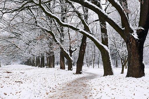 Дубова алея в парку вінницької психіатричної лікарні P1320374