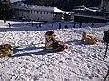 Пампорово-кучешки впрягове - panoramio.jpg