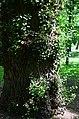 Парк Берёзовая роща в Киеве. Фото 44.jpg