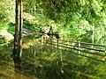 Повноводне літо на озері Синєвир.JPG