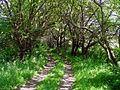 Солнечные зайцы - panoramio.jpg