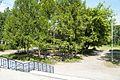 Тула. Стадион Металлург - panoramio (1).jpg