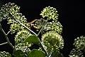عکس از گلها و گیاهان باغ بوتانیکال تفلیس - گرجستان 49.jpg