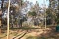 อุทยานแห่งชาติทุ่งแสลงหลวง Thung Salaeng Luang National Park - panoramio.jpg