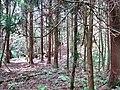 万源市尖山村后 五十年前知青植的树已经成材 - panoramio.jpg