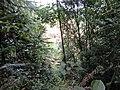 从原生态的山林里往外看,即将走到被大面积破坏的山体部分 - panoramio.jpg