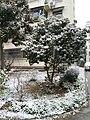 南京雪景20181230 07.jpg