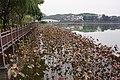 新營天鵝湖 Xinying Swan Lake - panoramio.jpg