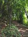 汤斜登山道 - Tangxie Mountain Trail - 2014.08 - panoramio (1).jpg