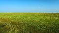 热尔大坝草原Rerdaba grassland - panoramio.jpg