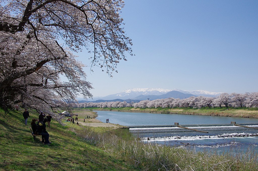 白石川堤一目千本桜 Thousand Trees of Cherry Blossoms at the Bank of Shiroishi River - panoramio