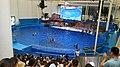 福建长泰天柱山欢乐大世界 海豚剧场-海豚表演 08.jpg