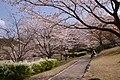 鏡山公園 Kagamiyama park - panoramio.jpg