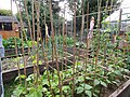 -2020-07-01 Vegetable garden with raised beds, Trimingham, Norfolk.JPG