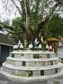 023 Bodhi Tree and Plaques (9207825818).jpg