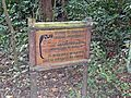 127 Cotton-top tamarin extinction Tayrona Colombia.JPG
