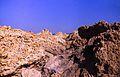 165Zypern Coral Bay (14110911423).jpg