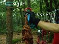 20030830중앙119구조단 산악계곡구조 훈련10.jpg