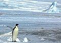 2007 Snow-Hill-Island Luyten-De-Hauwere-Emperor-Penguin-66.jpg