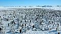 2007 Snow-Hill-Island Luyten-De-Hauwere-Emperor-Penguin-78.jpg