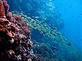 2010 Thailand Koh Phi Phi & Lanta scuba diving3.jpg