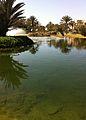 2011-02-22-Golf-Soleil-12.JPG