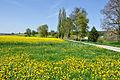 2012-04-28 15-12-22 Switzerland Kanton Schaffhausen Ramsen.JPG