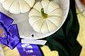 2013 Iowa State Fair (9570822523).jpg