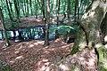 20140822 Waterpoel op de Waterberg Arnhem.jpg