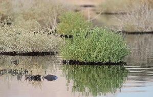 2014 Israeli oil spill - 2014 Israeli oil spill in Evrona nature reserve
