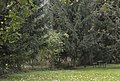 2014 Krosnowice, park przy dworze, 05.JPG