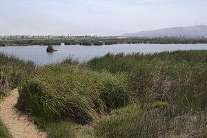 Pantanos de Villa Wildlife Refuge - Image: 2014 view of Laguna Principal, Refugio de Vida Silvestre los Pantanos de Villa