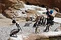 2015-05-24 Vogelpark Marlow 20.jpg