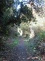 2018-09-24 Footpath across School Common, Lower Southrepps (2).JPG