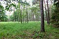 2019-08-17 Hike Hardter Wald. Reader-23.jpg