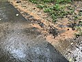 2021-07-09 16 18 03 Muddy storm water runoff crossing a walking path during heavy rain in the Franklin Glen section of Chantilly, Fairfax County, Virginia.jpg