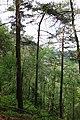 20210518. Sächsische Schweiz.Rauenstein.-031.jpg
