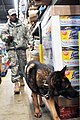 289th Military Police K-9 training DVIDS496304.jpg
