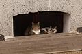 2 cats waiting stop raining.JPG