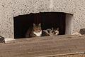 2 cats waiting stop raining.JPG