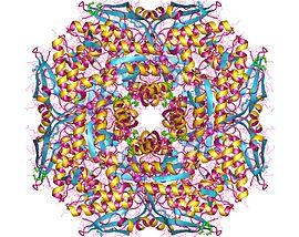 5-dihydro-5-oxofuran-2-acetate lyase (decyclizing)