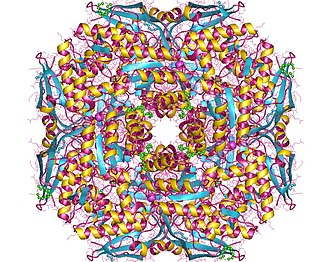 Muconate lactonizing enzyme - Muconate cycloisomerase oktamer, Thermotoga maritima