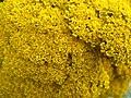 4983 - Grindelwald - Flowers.JPG
