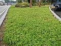 8095jfQuezon Memorial Circle City Monumentfvf 24.JPG