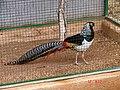 A@a paphos animal ^ bird park Agios Georgios paphos cy - panoramio (2).jpg